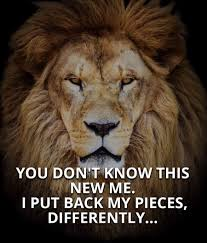 Lion Motivational Quotes Best Quotes For Your Life