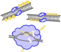 Genome Editing Genome Editing Innovative Genomics Institute Igi