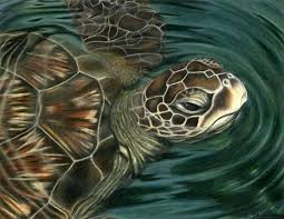 Small Picture 328 best Turtles Frogs images on Pinterest Sea turtles Sea