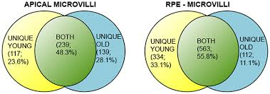 Venn Diagram Fractions Venn Diagram Showing Overlap Of Proteins Identified In Both Young