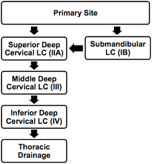 Diagram Of Lymphatic Drainage Pathways For The Lateral