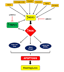 Drugs In Hair Chart Flow Chart Showing Various Potentially Harmful Drugs Agents