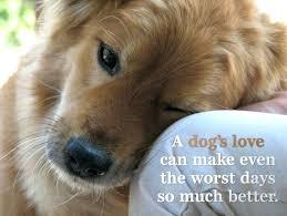 Dog Quotes Inspirational Impressive Dog Quotes Inspirational Also 48 To Frame Astounding Inspirational