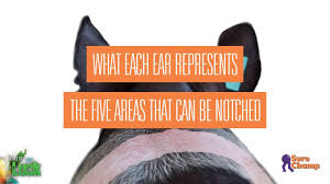 Pig Ear Notch Chart Show Pig How To Read Ear Notches