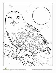 Small Picture Snowy Owl Worksheet Educationcom