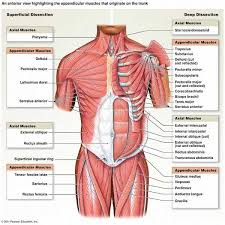 Human Skeleton Wall Chart Human Body Skeletal System Anatomical Chart Poster Skeleton