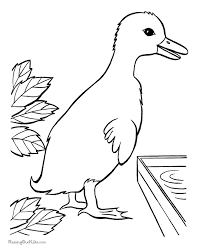 Duck Picture To Print And Color