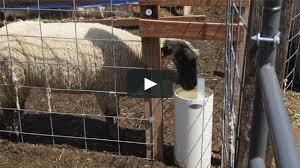 <b>Drinking</b> Post Frost Free <b>Automatic Sheep</b> Waterer on Vimeo