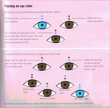 Eye Genetics Chart Genetics Digging Into Our Past Carving Our Future