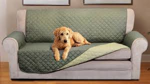 a dog on the couch