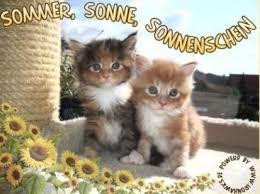 Sommer Sonne Sonnenschein Sommer Bild 2938 Gbpicsonlinecom