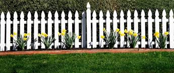 picket fence design. A White Picket Fence In Front Of Hedges With A Row Daffodils To The Design