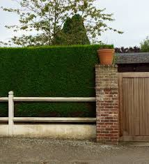 fence and hedge combination for privacy