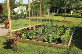Small Picture Organic Winter Vegetable Garden Garden Ideas