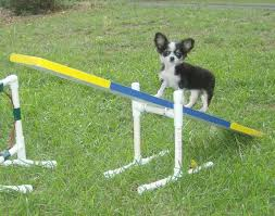 diy dog agility a frame best of 132 best the dog school images on