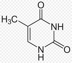 Thymine Uracil Adenine Nucleic Acid Structure Cytosine Dna