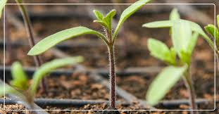 how to start a garden from seeds ifa