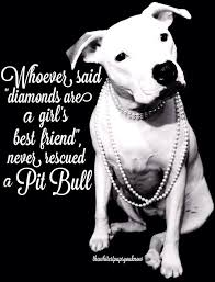 Pitbull Quotes 34 Best 24 Best Pits Are Sweethearts Love A Pitbull Pit Bull Love