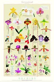 Amazing Orchids The Closest Life Gets To Breathairianism