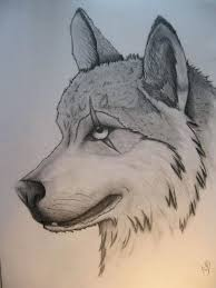 Animal Sketching Ideas