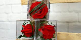 Resultado de imagen de imagenes de flores eternas