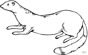 Ferret 11 coloring page | Free Printable Coloring Pages