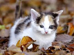 1920x1080 cute cat wallpapers kitten wallpaper background hd cute