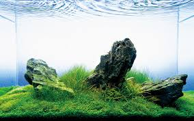 Image result for aquarium cleaning services