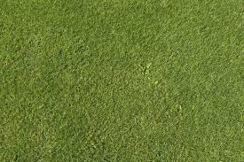 grass texture hd. Brilliant Texture To Grass Texture Hd