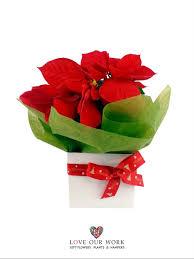 flowering plant says like the beautiful poinsettia