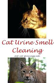 how to clean urine from couch how to clean cat urine from couch best spray for how to clean urine from couch clean cat