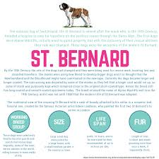 For these unexpected occasions, you cover yourself with health and life insurance. St Bernard Dog Wednesdaywisdom Stbernard Dog Infographic St Bernard Dogs Dog Insurance Cat Insurance