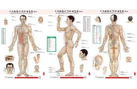 Acupuncture Wall Charts Download Standard Meridian Points Of Human Wall Chart Female Acupuncture Massage Point Map Flipchart Hd 3 Chinese And English Canada 2019 From Healthystore