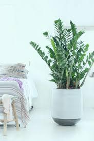 Professionel Pflanzen Fürs Schlafzimmer Kleiderschrank Weiß Mit