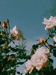 Aesthetic Flowers Wallpapers ...