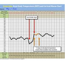 Basal Chart Celsius Download Our Free Bbt Chart Zoom Baby