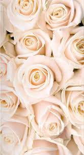Black and rose gold phone wallpapers. Pin By Laura Ferry On Rose Gold Blush White Roses Wallpaper Rose Gold Wallpaper Rose Wallpaper