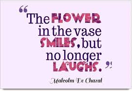 Paper Flower Quotes Imerch Flower In The Vase Quotes By Malcolm De Chazal Photographic