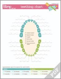 Tool Teething Chart