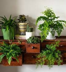 60 Best Indoor Plants Decor Ideas for Apartment and Home Air Purifiying
