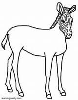 Small Picture Zebra Without Stripes Coloring Coloring Pages