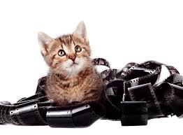 Lustige Und Süße Katzen Bilder Videos Startseite Facebook