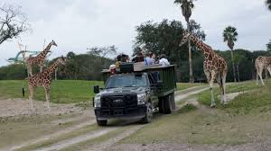 your guide will take you right out into the animals and you ll be given food to feed the giraffes