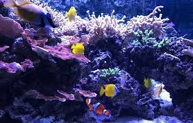 aquarium fish tank 9 12 15 21 led light smd5050 blue white 18 28 38 48cm bar submersible waterproof clip lamp decor eu plug