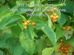 Fruit Trees In Kansas