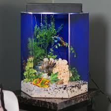 Fun Fish Tank Decorations Freshwater Fish Aquarium Hours Of Family Entertainment