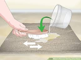 image titled remove old dog urine stains step 12