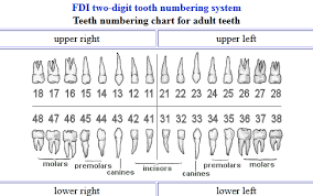 Palmer Notation Method The Diary Of A Dental Intern