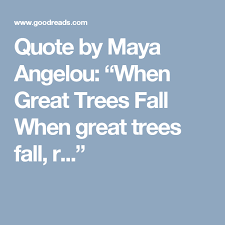 """What If I Fall Quote Extraordinary Quote By Maya Angelou """"When Great Trees Fall When Great Trees Fall"""