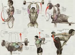 Top 12 Triceps Workout At Gym